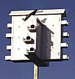 Lonestar Alamo Purple Martin House